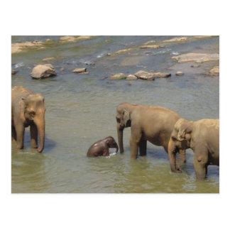 Carte postale de troupeau d'éléphant