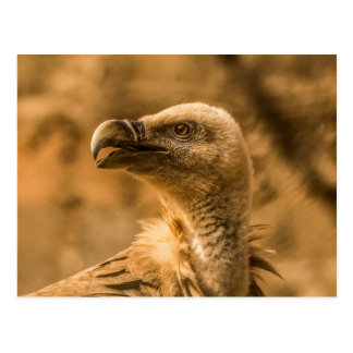 Carte postale de vautour