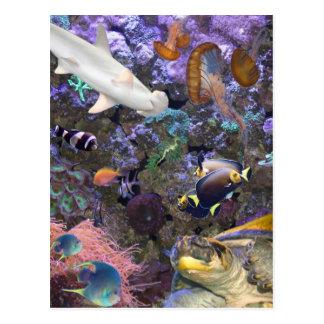 Carte postale de vie marine