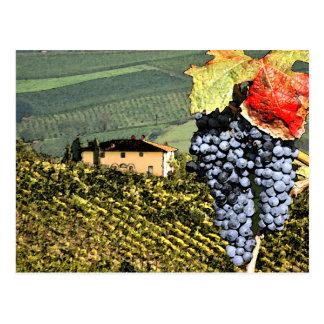 Carte postale de vignoble de la Toscane