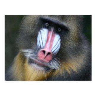 Carte postale de visage de babouin
