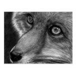 Carte postale de visage de Fox