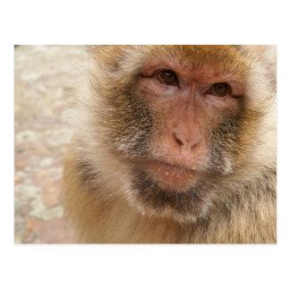 Carte postale de visage de singe