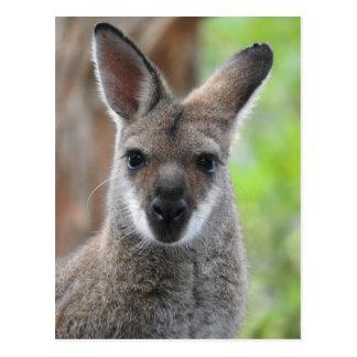 Carte postale de wallaby