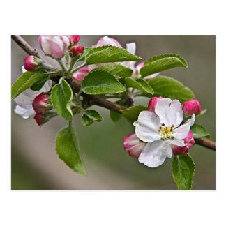 Carte postale de Winchester VA de 05 fleurs