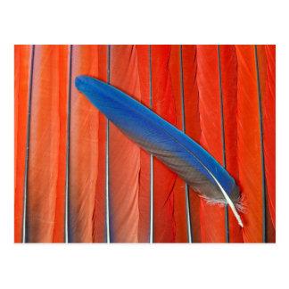 Carte Postale D'écarlate d'ara de plume toujours la vie rouge