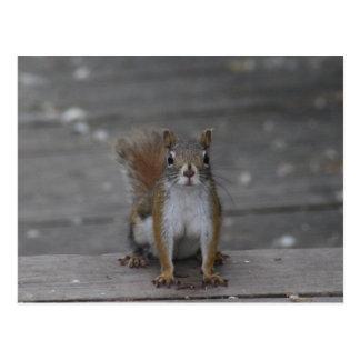 Carte postale d'écureuil