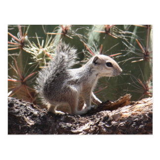 Carte postale d'écureuil d'antilope de bébé