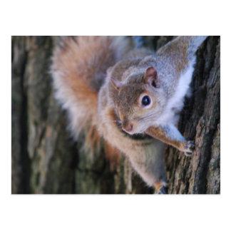 Carte postale d'écureuil d'arbre