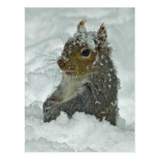 Carte postale d'écureuil de neige