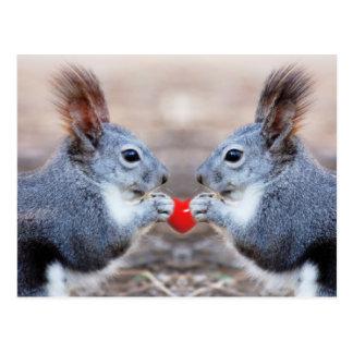 Carte postale d'écureuils de Valentine