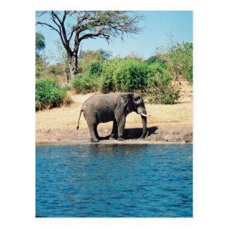 Carte postale d'éléphant