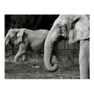 Carte postale d'éléphants asiatiques