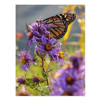 Carte Postale Dernier papillon de monarque