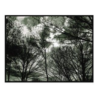 Carte postale des arbres |