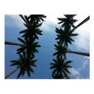 Carte postale des Caraïbes de palmier royal