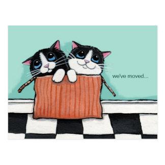 Carte Postale Des chats dans une caisse d'emballage | nous avons