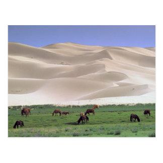Carte Postale Désert de l'Asie, Mongolie, Gobi. Chevaux sauvages