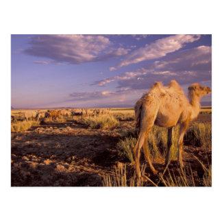 Carte Postale Désert de l'Asie, Mongolie, Gobi, grand Gobi