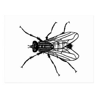 Cadeaux parasite - Dessin de mouche ...