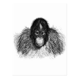 Carte Postale Dessin élégant de chimpanzé de singe d'orang-outan