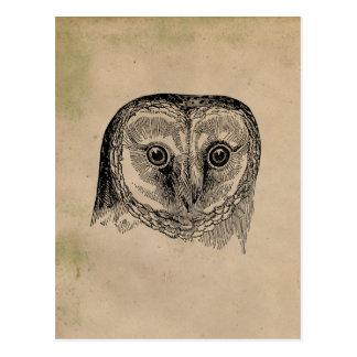 Carte Postale Dessin vintage de hibou