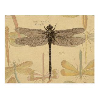 Carte Postale Dessin vintage de libellule