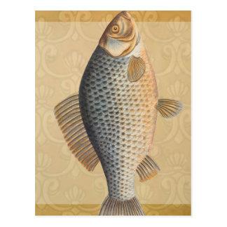 Carte Postale Dessin vintage de poisson d'eau douce de carpe