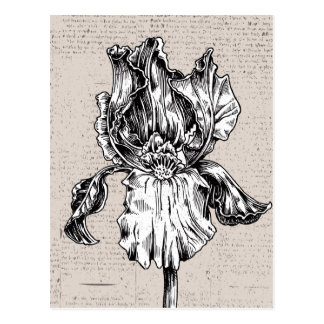 Carte Postale Dessin vintage d'iris