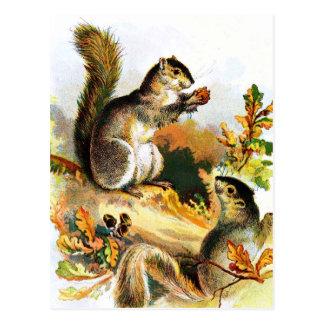 Carte Postale Dessin vintage : Écureuils en automne