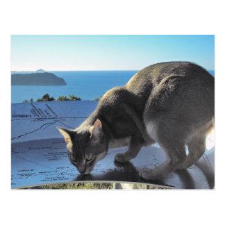 Carte Postale Dessus abyssinien de chat de bâti Paku Nouvelle
