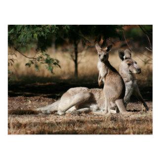 Carte Postale Détente de kangourou et de Joey de mère