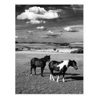 Carte Postale Deux chevaux
