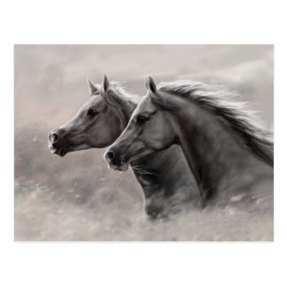 Carte Postale Deux chevaux peignant les étalons noirs de cadeau