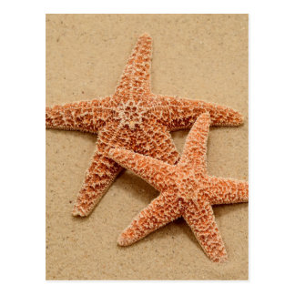 Carte Postale Deux étoiles de mer de sucre