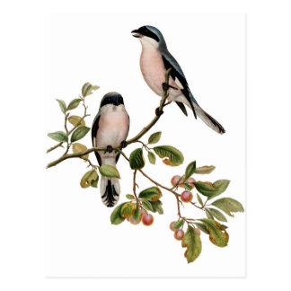 Carte postale - deux oiseaux