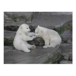 Carte Postale Deux petits animaux d'ours blanc