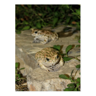 Carte Postale Deux petits crapauds - copie de grenouille verte