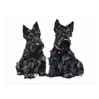 Carte Postale Deux terriers écossais noirs
