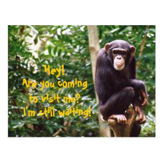Carte postale d'humeur de chimpanzé