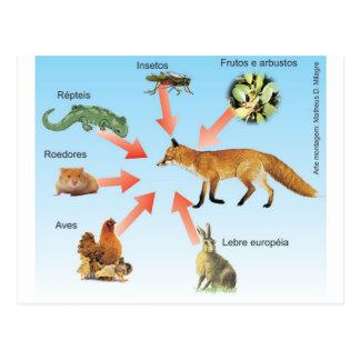 Carte Postale dietaraposa11 projet didactique régime du renard