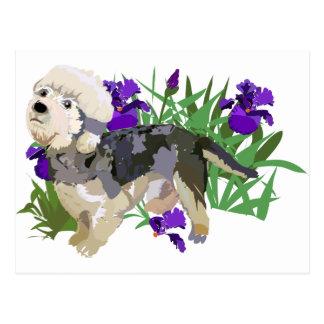 Carte Postale Dinmont élégant parmi l'iris
