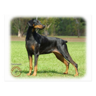 Carte Postale Dobermann