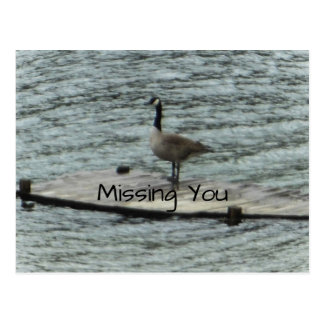 Carte Postale Dock debout d'oie du Canada