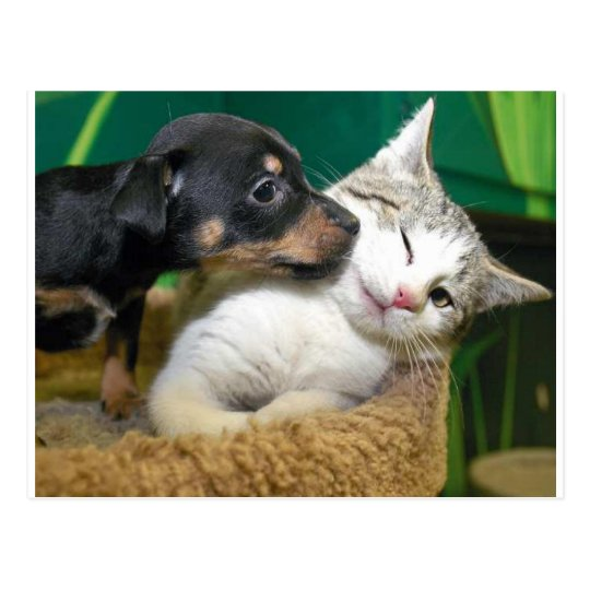 Carte Postale Dog and cat