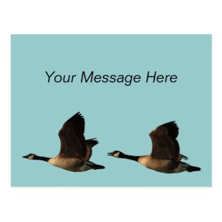 Carte postale d'oies de vol