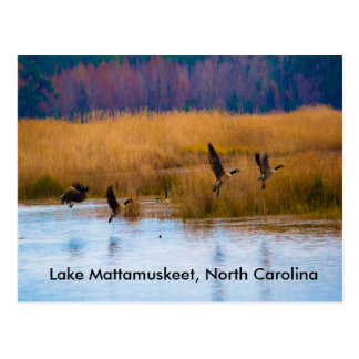 Carte postale d'oies de vol de Mattamuskeet de lac