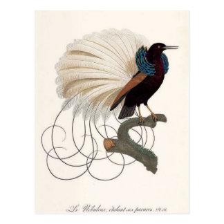 Carte postale d'oiseau de paradis