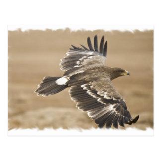 Carte postale d'oiseau d'Eagle de vol
