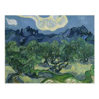 Carte postale d'oliviers